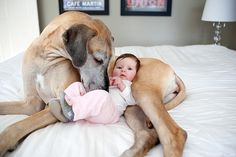 Big dog + Tiny baby = love