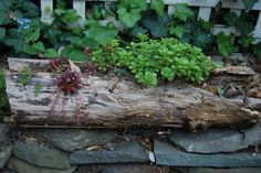 naturally hollowed out log turned into a planter for succulents