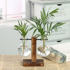 Why is this Hydroponic Glass Vase Set useful? Are you looking to get a fresh feeling and relieving your stress? Try with our Hydroponic Glass Vase Set! Vintage Vases, Glass Bulbs, Wooden Vase, Hydroponics Diy, Vase Set, Vase, Plant Vase, Glass, Flower Vases