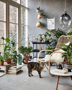 botanic living room / orangery with a rotan chair, plants, flowers and a cat | Styling Fietje Bruijn, Marianne Luning, Frans Uyterlinde | vtwonen june 2015 | #vtwonenshop