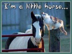 I 'm a little horse !