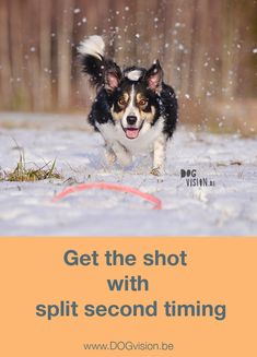 Get the shot with split second timing | Dog photography tips on www.DOGvision.be