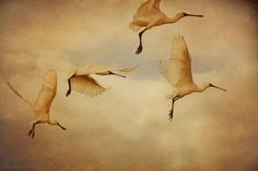 Birds by Cally Whitham