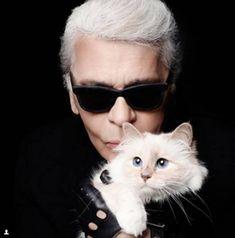 Reprodução/ Instagram - A gata Choupette, do estilista Karl Lagerfeld, tem até conta no Instagram (@choupettesdiary)