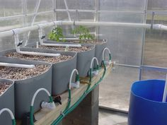 Aquaponics system using loop siphons and valved feeder lines to control water flow.