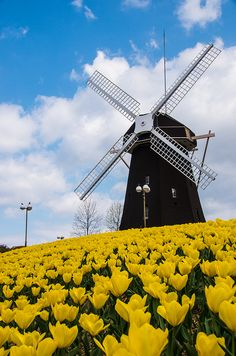 Spring Windmill by Yuumaki A on Flickr. #holland #windmill #travel