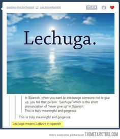 Can we make this a thing? Friend having a hard time, just text them lechuga. Friends pet just died, lechuga. Everything can be fixed with lechuga. Funny Shit, The Funny, Funny Memes, Funny Stuff, Random Stuff, Funny Things, Freaking Hilarious, Bad Memes, Funniest Memes