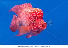colorful jellyfish video coloring book inspirations pinterest jellyfish - Colorful Fish Book