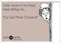 Little voices in my head keep telling me… 'Go Get More Chickens!' Little voices in my head keep telling me… 'Go Get More Chickens! Chicken Signs, Chicken Life, Chicken Humor, Chicken Quotes, Funny Chicken, Silkie Chickens, Pet Chickens, Raising Chickens, Keeping Chickens