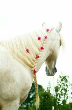 Pink fowers with a running braid down the mane, simply gorgeous.