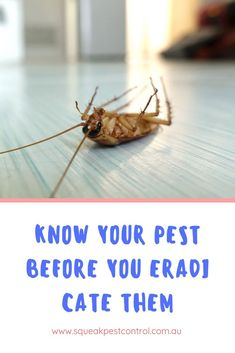 Although bugs get a foul rap, several serve a helpful purpose. Ladybugs and different beetles kill smaller insects that may otherwise destroy your rose or garden. Here are the pests that attack your home and belongings and ruin them. Small Insects, Beetles, Ladybugs, Pest Control, Ruin, Knowing You, Melbourne, Purpose, Garden