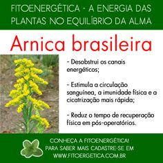 Arnica brasileira How To Stay Healthy, Healthy Life, Home Remedies, Natural Remedies, Plant Health, Reiki, Herbalism, Detox, The Cure