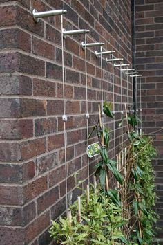 Garden Design Trellis Systems                                                                                                                                                                                 More
