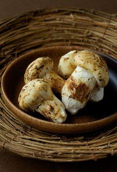 松茸 Matsutake mushrooms