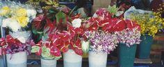 Big Island Day Trip! Things to Do in Hilo, Hawaii