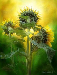Sunflower Art on Pinterest   Sunflowers, Sunshine and Language Of ...