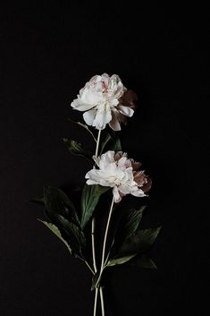 Collaboration with Jade from Finders Keepers. Dark Wallpaper, Tumblr Wallpaper, Flower Wallpaper, Nature Aesthetic, Flower Aesthetic, Dark Flowers, Beautiful Flowers, Flower Backgrounds, Wallpaper Backgrounds
