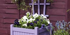 Me and my shadow: 5 Ways to Brighten Up Your Garden Fence