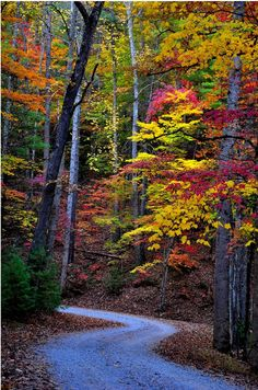 Great Smoky Mountains National Park, TN  http://www.flickr.com/photos/varakal/5424909137/