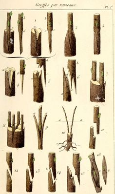 Fruit Tree Garden, Garden Plants Vegetable, Garden Trees, Grafting Fruit Trees, Grafting Plants, Trees And Shrubs, Trees To Plant, Permaculture, Farm Layout