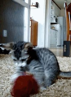 Cats and Dogs: Funny Cat Gifs & Dogs Gifs Collection