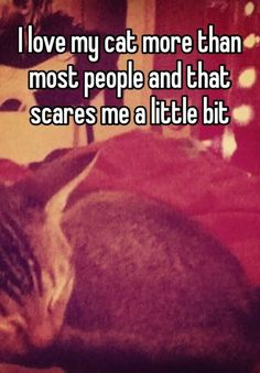 21 Things Cat Owners All Secretly Think Sometimes