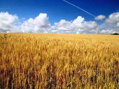 Lucien Lupi la chanson des blés d'or