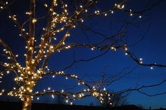 fairy lights in tree