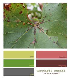 Autmn Leaf