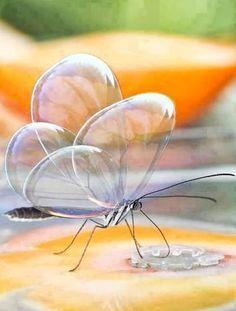 mariposa transparente - Buscar con Google