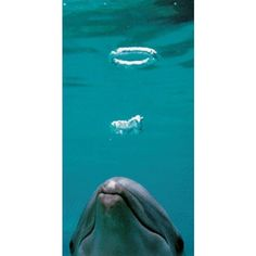dolphins actually hunt using these bubble rings- they use them to confuse and corral schools of fish! amazing