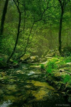 A little creek winds through a leafy forest on the enchanted grounds Beautiful World, Beautiful Places, All Nature, Nature Sounds, Walk In The Woods, Nature Pictures, Belle Photo, The Great Outdoors, Mother Nature