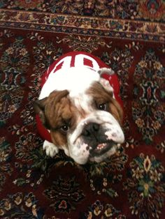 This is my Bama Taz!  Roll Tide!