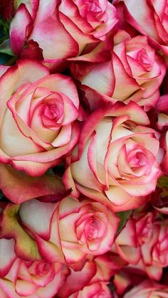 Source: pinterest.com Go to the garden when you need to remember that everything is love. ~ Unknown Jolie Fleur, Peonies, Pretty Roses, Beautiful Roses, Beautiful Gardens, My Flower, Love Flowers, Summer Flowers, Dried Flowers