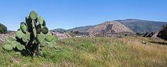 Teotihuacán, Mexico. Vista de la vegetación actual en el valle de Teotihuacán, compuesta por cactáceas, agaves y especies no nativas como el pirul.