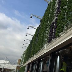 """Our #verticalfarm, flowing like """"amber waves of grain."""" Opening day at @usapavilion2015 at @expo2015milano. (Video by @ms_dianaperez)"""