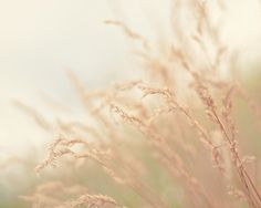 neutral nature photograph / earth tones, grass, wheat, oatmeal, beige / blowing in the wind / 8x10 fine art photo