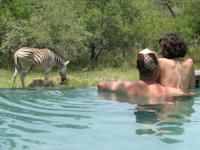 Turaco Lodge, Marloth Park, South Africa - Booking.com
