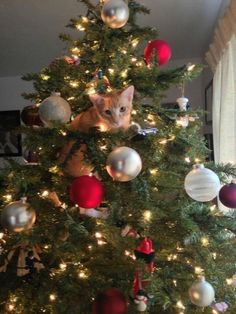 Your tree with them 17 cats who do not care about christmas