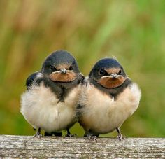 Funny Bird, Two Of A Kind, Cute Birds, Bird Watching, Beautiful Birds, Animal Kingdom, Eagles, Animal Pictures, Cute Animals