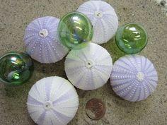 Sea Shells :: Devine Paint Center Blog