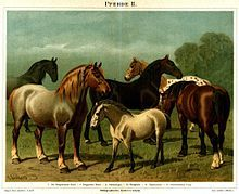 List of horse breeds - Wikipedia, the free encyclopedia <--- I'm gonna try n teach myself some shit cause nobody else taught me, I can ride but nobody taught me any facts