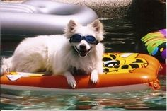Dog Pool Floats, Smiling Animals, Pet Sitting, Cute Little Animals, Just For Fun, Rafting, Funny Cute, Spring Break, The Great Outdoors