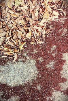 Prime tinte autunnali #foglie #terra