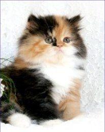 Kittens ktlong340  http://media-cache7.pinterest.com/upload/90212798755821537_pIHKK0OF_f.jpg