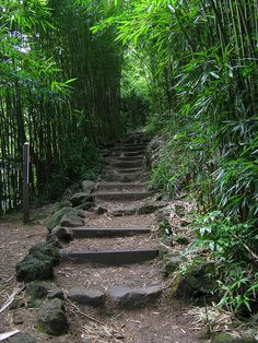 Bamboo Forest along the Pipiwai Trail, Hawaii, USA (by Mastery of Maps).
