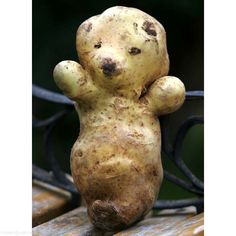 A potato shaped like Sooty the bear, found by Michael Audus in Cambridge. Mr Audus decided not to eat it. Freaky fruit and vile vegetables: mother nature's freaks of nature - Telegraph Weird Fruit, Funny Fruit, Weird Food, Funny Food, Fruit And Veg, Fruits And Vegetables, Funny Vegetables, Nature Artwork, Weird Shapes