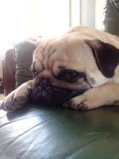 Carlin fatigué