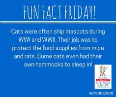#FunFactFriday Did you know? #funanimalfacts #catfacts #AERC #TwinCitiesanimalhospital #TwinCitiespetlovers