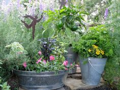 Metal wash tubs and troughs  Container Inspiration Gallery - Bonnie Plants